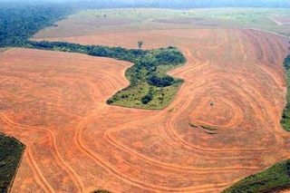 Deforestation2